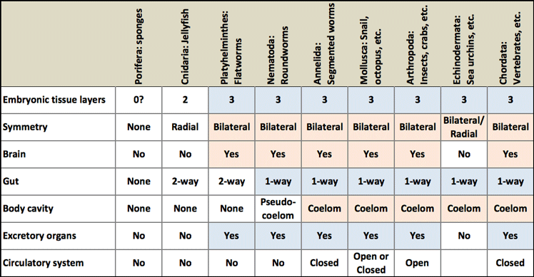 Table of body plan features